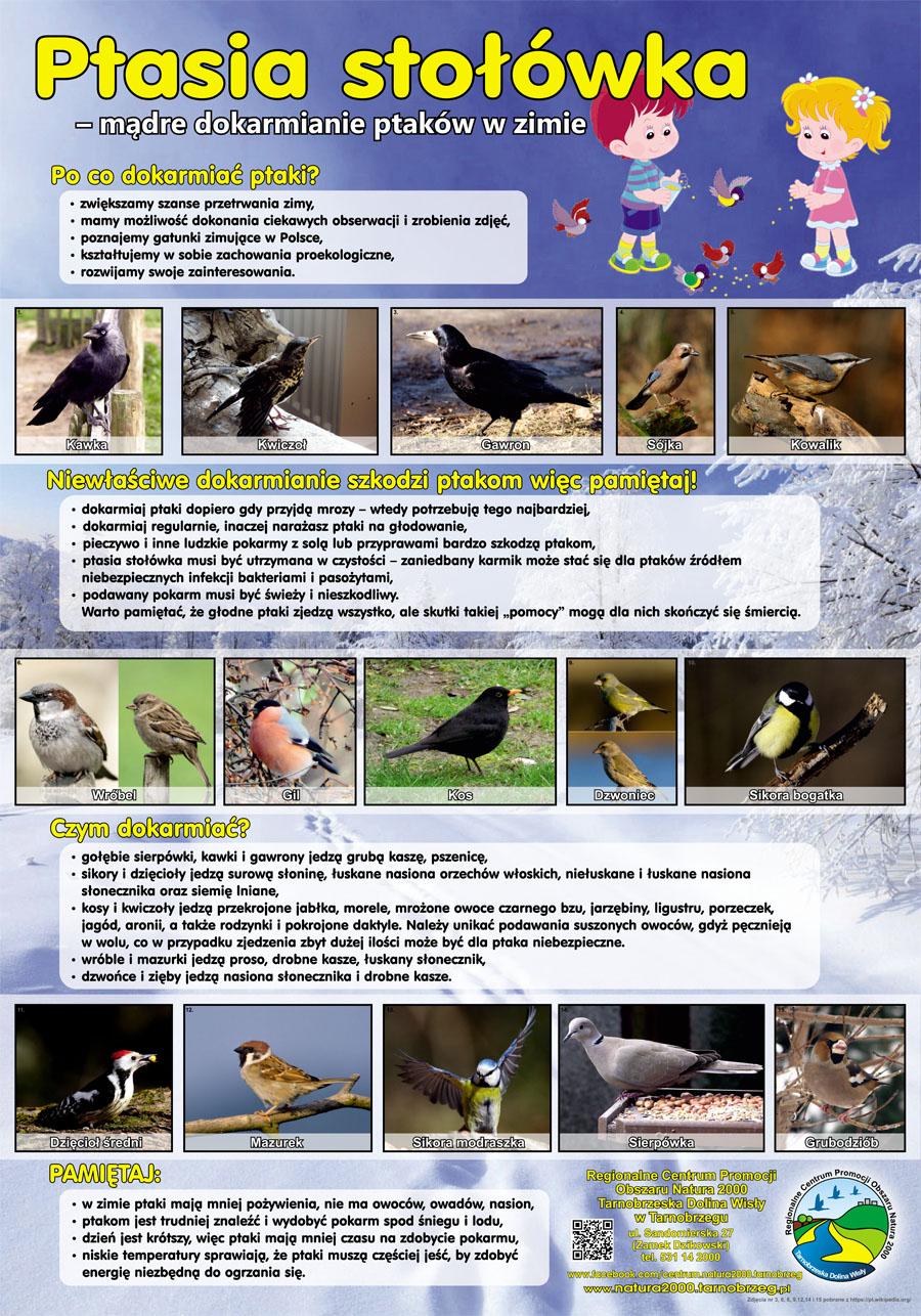 dokarmianie ptaków70x100